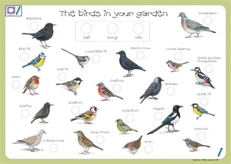 garden birds talkingpen uk