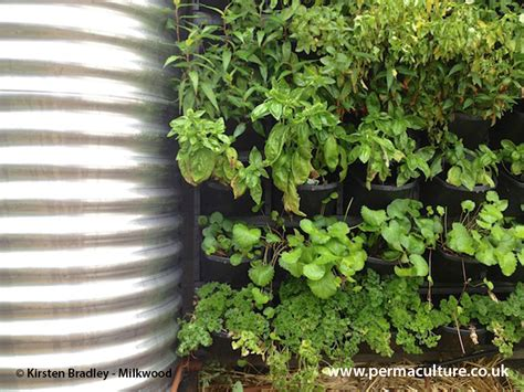 vertical gardening great for small spaces permaculture