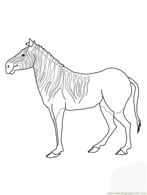 zebra face coloring page free zebra face coloring pages