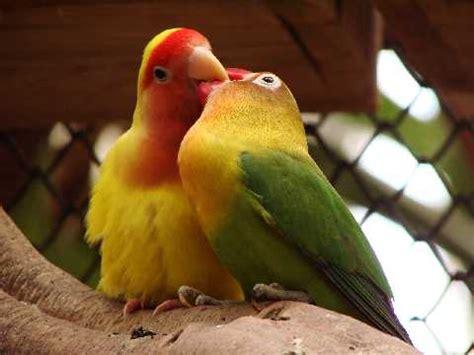 Imagenes De Animales Enamorados   animales enamorados para toda la vida letra nueva