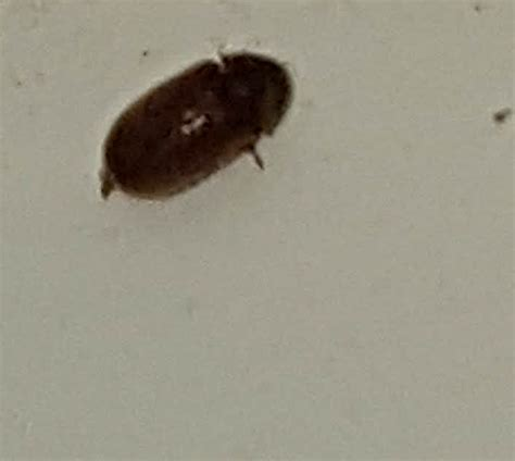 large black flies in bathroom biscuit beetle in bedroom functionalities net