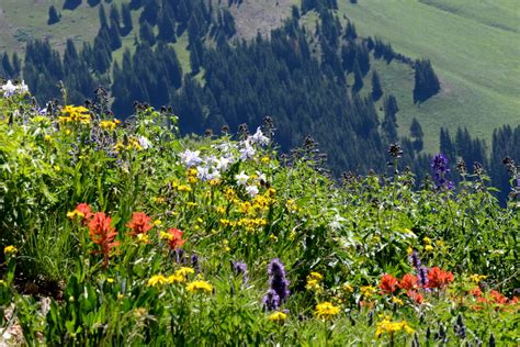 Wyoming Wildflowers The Beginning rocky mountain wildflower season lengthens by more than a