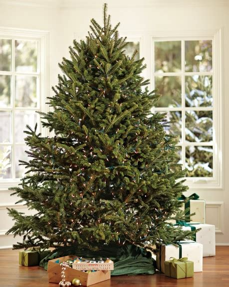 fresh blue ridge mountain christmas tree williams sonoma