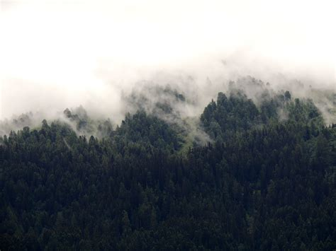 bitcoin fog tutorial fog over the tree and forest in france image free stock