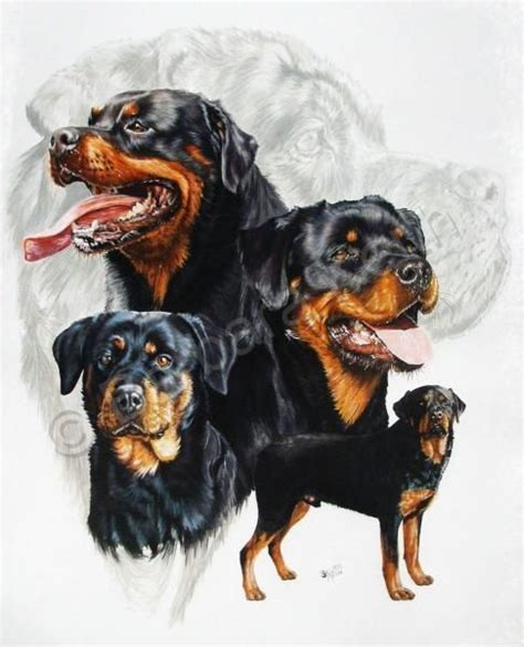 rottweiler drawings top 25 ideas about rottweiler on pop rottweilers and work
