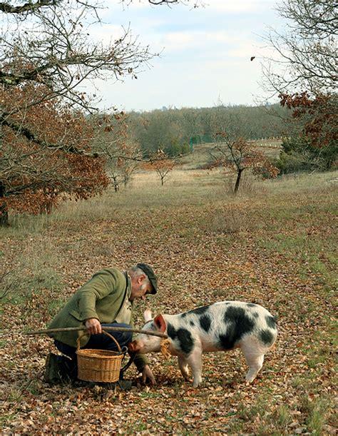 how to your to hunt truffles truffle david lebovitz