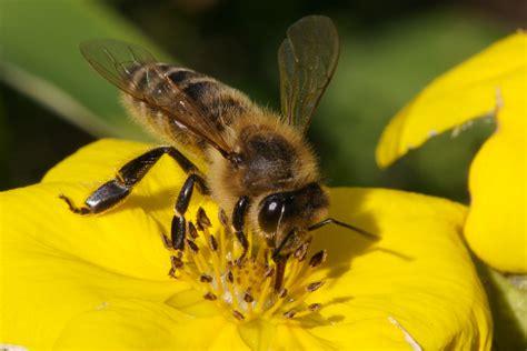bees2 jpg