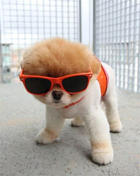 cool puppy cool puppy 1funny
