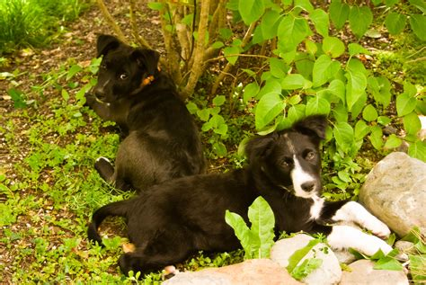 raising puppies 12 things i learned raising our littermate puppies thedogtrainingsecret