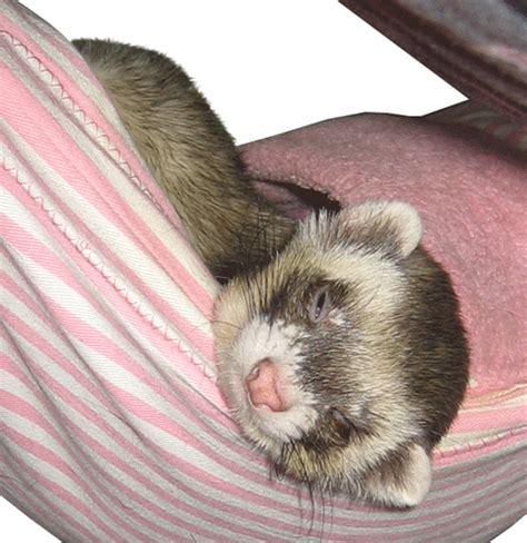 ferret bed pink stripe corner ferret hanging bed