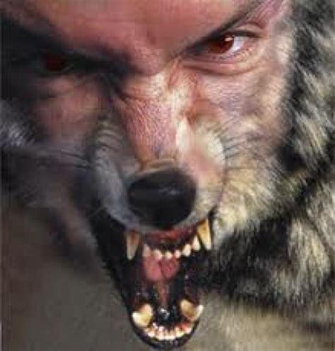 imagenes de wolverine en la vida real lista criaturas sobrenaturales seres y animales