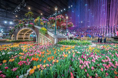 flower shoe philadelphia flower show tickets 4k wallpapers