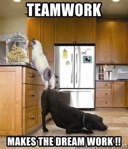 Teamwork Makes The Dreamwork Meme - teamwork makes the dream work dog helping cat