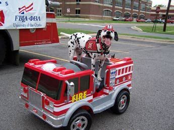 fire station dog house dalmatians were the official dogs of the fire station perry ponders