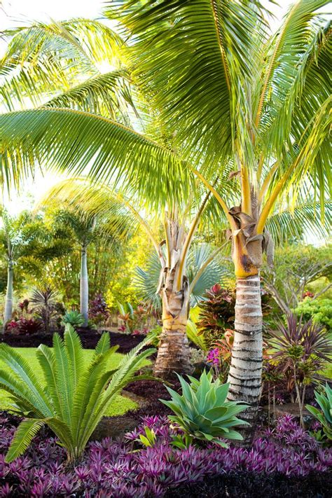 25 best ideas about palm trees landscaping on pinterest
