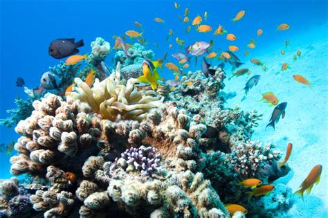 majority of marine reserves are ineffective new study