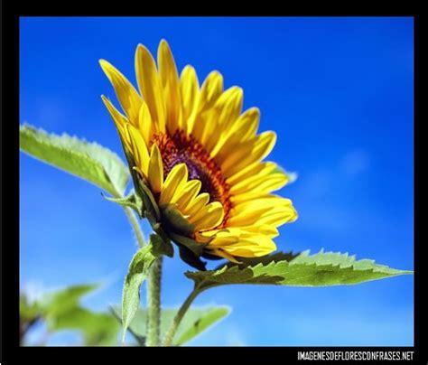 imagenes para perfil flores im 225 genes de rosas bonitas para perfil flores preciosas