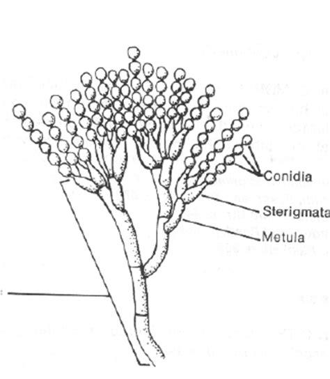 ciri ciri  manfaat jamurfungi bigysa