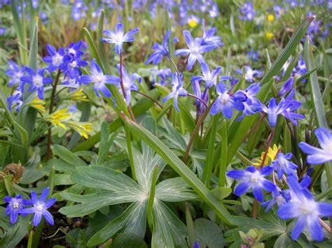 fiore immagine foto fiori di co fiori idea immagine
