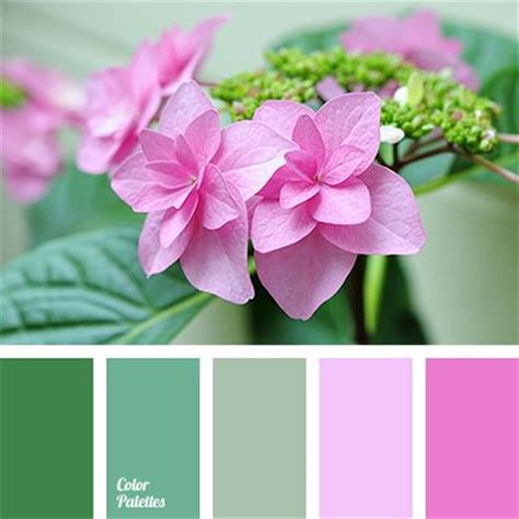 colors that match pink 1638 best images about color palettes on