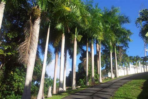 hacienda virtual puerto rico hacienda las palmas el yunque private villa with pool