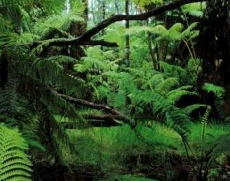 zone 8 tropical plants 65 best images about tropical plants zone 6 on