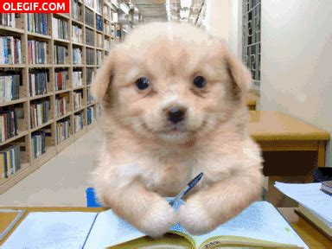 imagenes gif estudiando gif un simp 225 tico perro estudiando gif 911