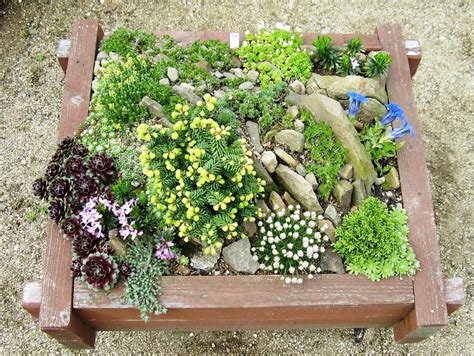 Gardenless Gardener Rock Garden Ideas Rock Garden Plan