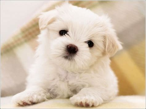 best small dogs for families small dogs for families pet photos gallery 5nbqpez3vx