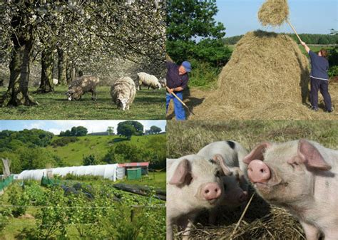 Sustainable Living Courses With The Low Impact Living Initiative by Smallholding Lowimpact Orglow Impact Living Info