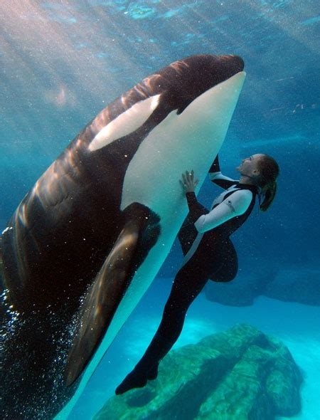 17 best ideas about killer whales on orcas
