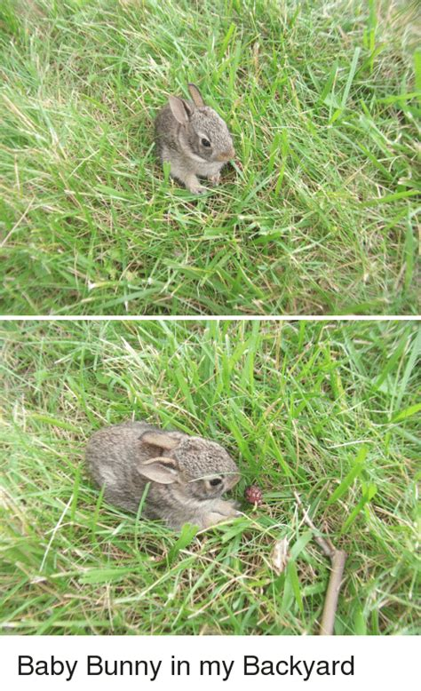bunny in my backyard 25 best memes about baby bunny baby bunny memes