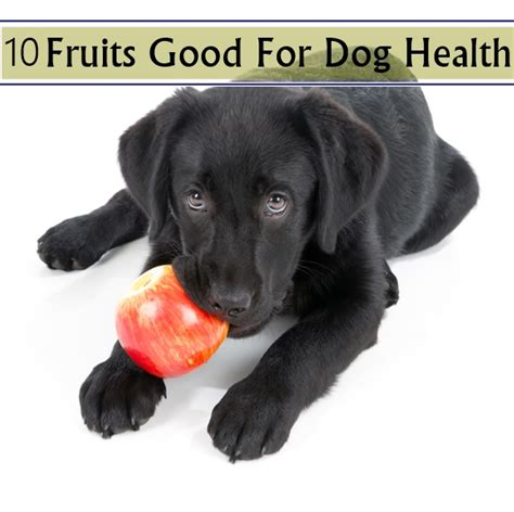 10 Surprising Fruits Dogs Can Eat