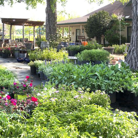 best place to buy a house in texas best places to buy plants neil sperry s gardens