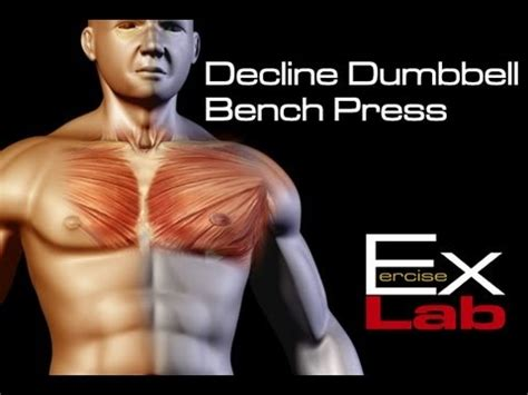 why do decline bench press decline bench press chest exercises youtube