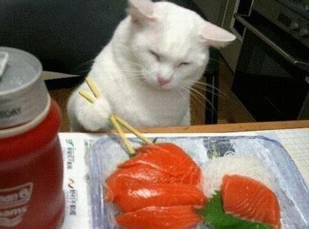 homemade cat food my pet friends