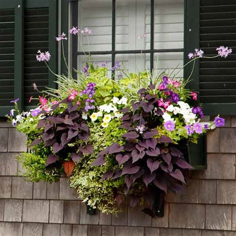 window boxes for plants pop and drop plant a better window box garden this