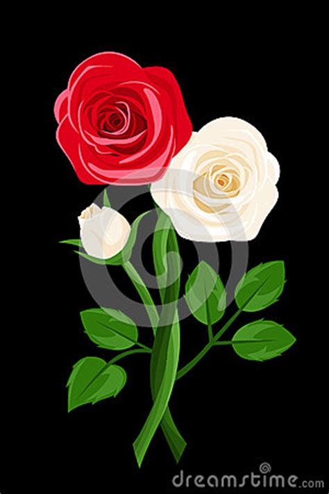 vector red and white intertwined roses royalty free stock