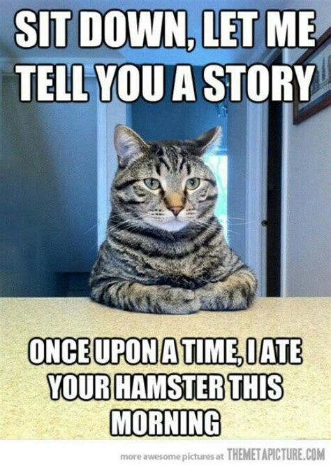 20 Jokes About by 20 Animal Jokes And Memes Quotes And Humor
