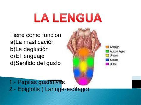 la lengua de los la lengua