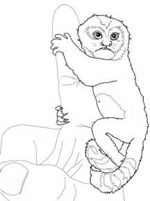 marmoset monkey coloring page baby pygmy marmoset coloring page super coloring