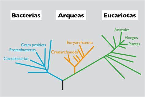 cuantas cadenas de adn tiene el ser humano el tama 241 o del genoma y la complejidad de los seres vivos
