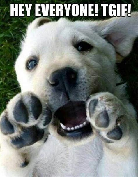 friday puppy he s so excited it s friday humor the o jays happy and sayings