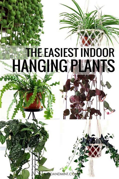 indoor hanging plants  maintenance care