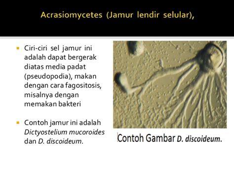 Mikrobiologi Parasitologi fungi mikrobiologi parasitologi
