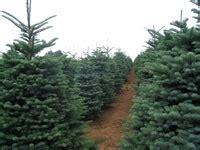 christmas tree house torrance ca kid friendly