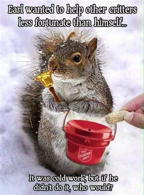 images  squirrels  pinterest funny mondays  merry christmas
