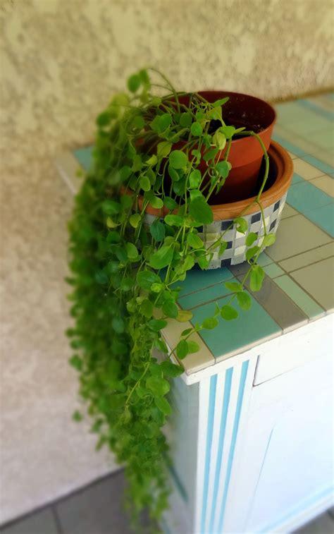 Ordinaire Plante Verte Tombante Interieur #4: 78357897_o.jpg