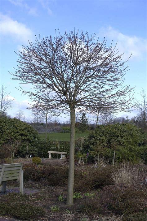 Garten Kaufen Stralsund by Pflanzen Kaufen B 228 Ume Pflanzen Sortiment Gartenwelt