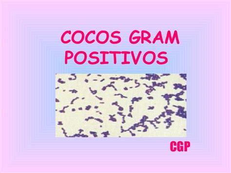 imagenes gram positivos cocos gram positivos